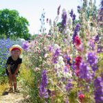toddler-in-confetti-fields-cotswold-baby-co
